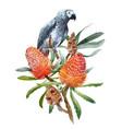 watercolor banksia flower composition vector image vector image