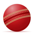 ball for cricet vector image vector image