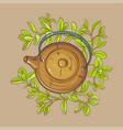 marjoram tea in teapot vector image vector image