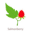 salmonberry icon isometric 3d style vector image vector image