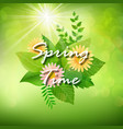 spring background with colorful flowers and green vector image vector image