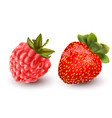 a juicy raspberry and vector image