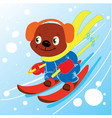 bear skiing in winter kid graphic vector image