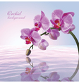 Beautiful background with orchid vector image