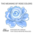 Blue rose infographics vector image vector image