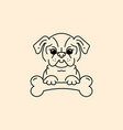 cartoon pug pug-dog with a bone bulldog vector image