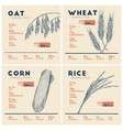 health benefits of cereals rice wheat oat and vector image