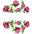 pink blossom flowers peonies with leaves vector image