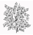 Jasmine flower Vintage elegant flowers Black and vector image