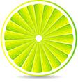 juicy lime slice vector image