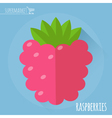 Raspberry icon vector image