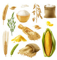 cereals icon set vector image vector image
