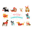 collection of christmas dogs merry christmas vector image vector image
