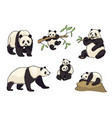 set of pandas in cartoon style vector image vector image