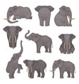 flat set of elephants in different poses vector image