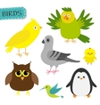 Bird set Colibri canary parrot dove pigeon vector image
