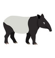 cute friendly wild animal black and white tapir vector image vector image