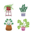 indoor plants in pots landscaping at home decor vector image vector image
