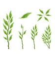 Set of Pedilanthus Tithymaloides Leaves vector image vector image