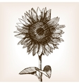 Sunflower hand drawn sketch style vector image