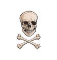 cartoon skull and cross bones isolated vector image