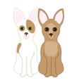 Chihuahuas vector image vector image