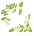 corner decor elements with jasmine flowers bloom vector image