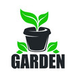 garden greenery plant growing in pot isolated icon vector image vector image