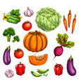 vegetable and farm market veggies sketches vector image vector image