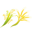 Wheat and oats ears vector image vector image