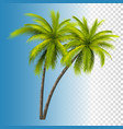 green coconut palm vector image