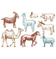 farm cute animal big set vector image