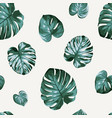 floral seamless pattern monstera philodendron vector image