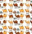 Seamless background with camels and rocks vector image vector image