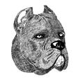 Cane Corso dog portrait creative vector image vector image