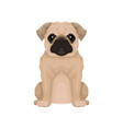 flat icon of cute pug puppy small domestic vector image