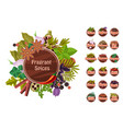 fragrant spices set thyme saffron pepper vector image