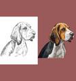 portrait cute funny dog beagle vector image