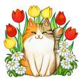watercolor ginger tabcat in a tulip garden vector image