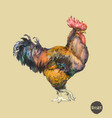 watercolor of the cock rooster vector image vector image