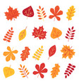 Autumn leaves set isolated on white background