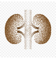 human kidneys dotted silhouette background vector image vector image