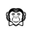 noble chimpanzee chimp monkey primate or ape vector image vector image