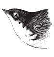 white belied swallow vintage vector image vector image