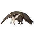 anteater on white background vector image vector image