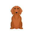 cute brown dachshund with shiny eyes small vector image