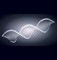 dna light vector image vector image