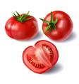 set realistic full and sliced tomatoes vector image vector image