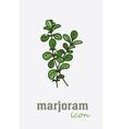 Sweet Marjoram icon Vegetable green leaves vector image vector image