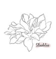 beautiful monochrome black and white dahlia flower vector image vector image